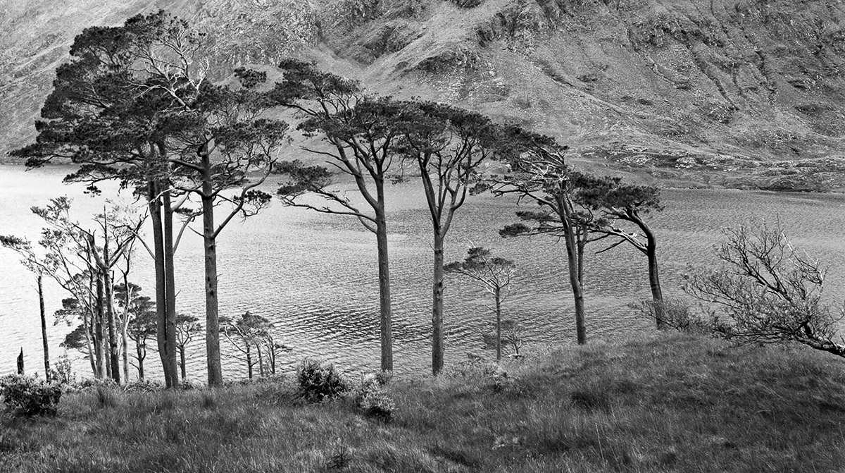 IRE02-293_Trees_Doo_Lough.jpg