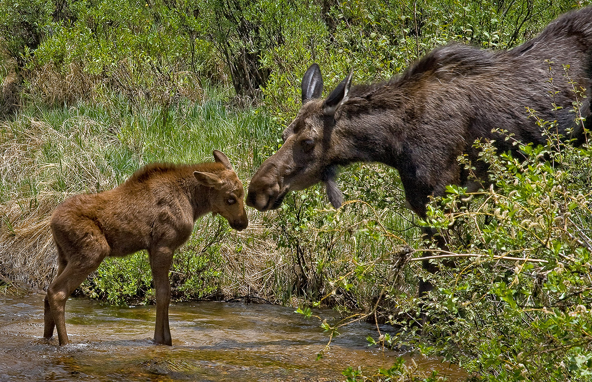 RMNP08-068-A_Mother's_Love-MASTER-NIK_Sharpened_Print.jpg